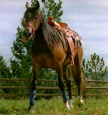 Another Horse to Saddle, Online Cowboy Poetry Book